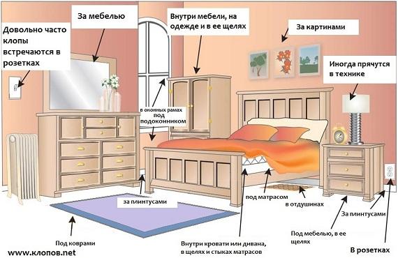 Клопы постельные и их места обитания